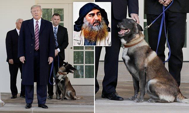 ترامپ: اندازه آن سگ هم از من تقدیر نشد!